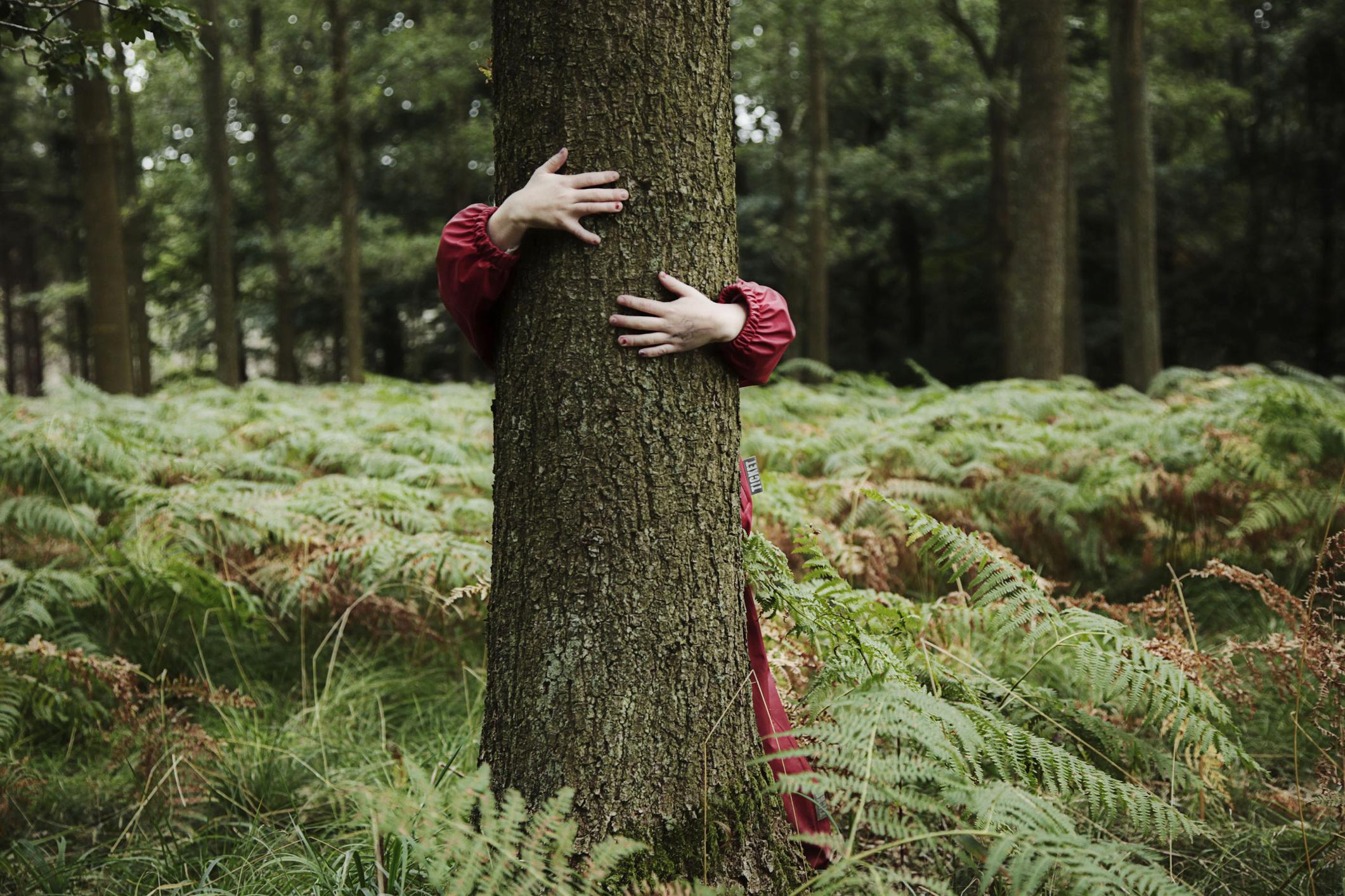 Træ grøn el