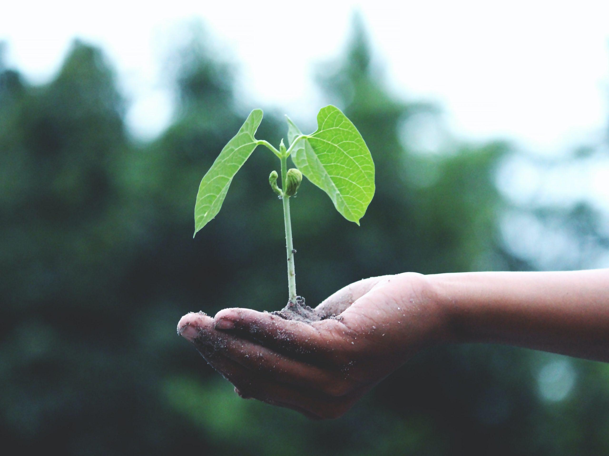 Tilmeld billig grøn elaftale