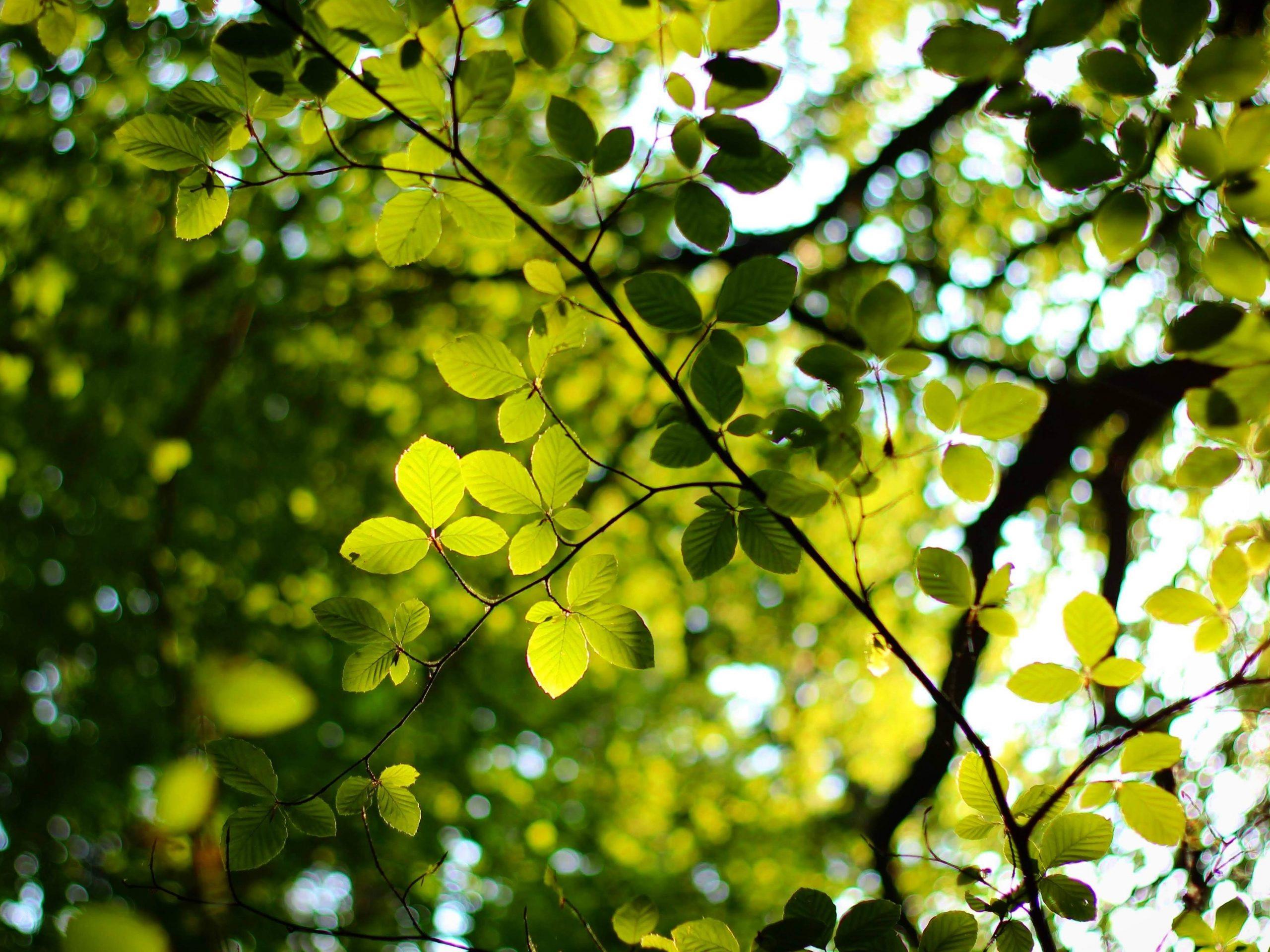 Grønne blade elregning